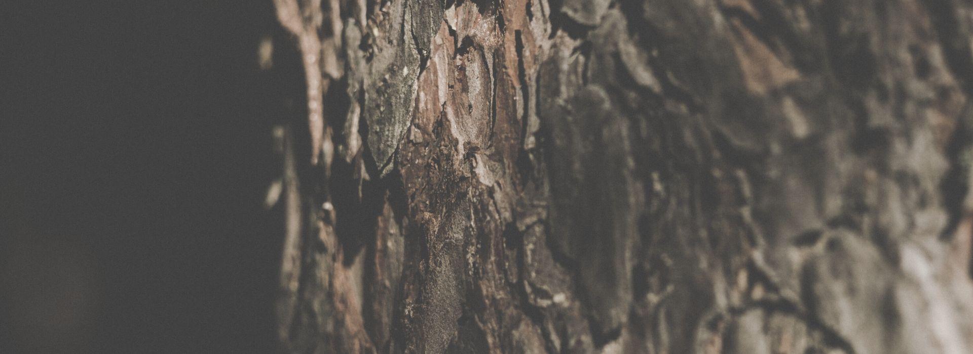 rodoslovnoe drevo blog